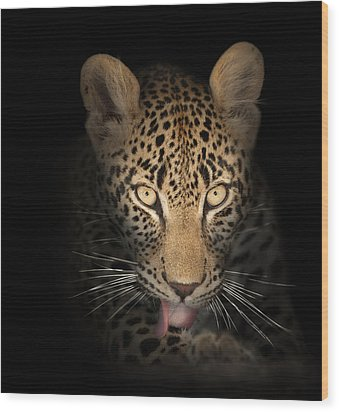 Leopard In The Dark Wood Print by Johan Swanepoel