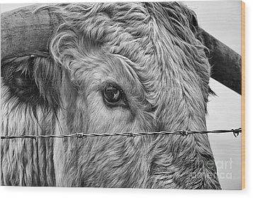 Let Me Go Free Wood Print by John Farnan