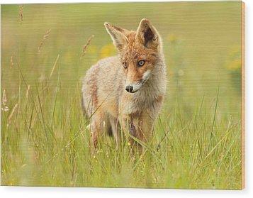 Lil' Hunter - Red Fox Cub Wood Print by Roeselien Raimond