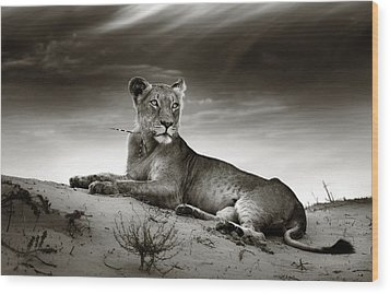 Lioness On Desert Dune Wood Print by Johan Swanepoel