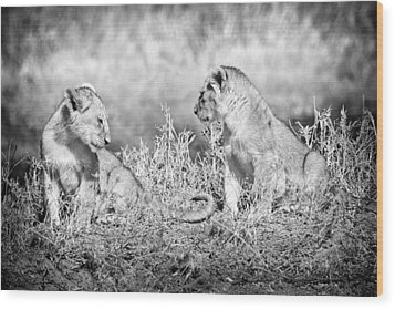 Little Lion Cub Brothers Wood Print by Adam Romanowicz