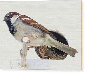 Little Sparrow Wood Print by Karen Wiles