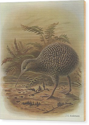 Little Spotted Kiwi Wood Print by J G Keulemans