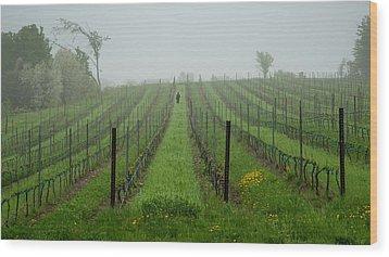 Lone Figure In Vineyard In The Rain On The Mission Peninsula Michigan Wood Print by Mary Lee Dereske