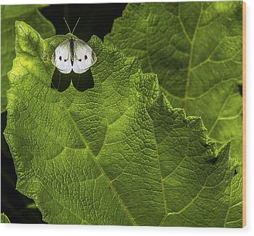 Lonely On A Leaf Wood Print by Tim Buisman