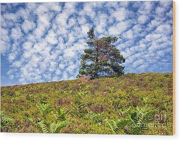 Lonely Tree Wood Print by Adrian Evans