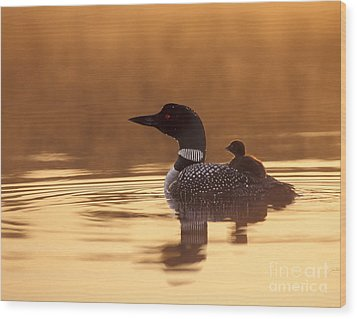 Loon With Chick At Dawn Wood Print by Jim Block