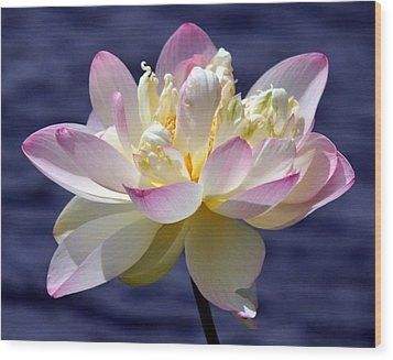 Lotus By The Lake Wood Print by Gail Butler