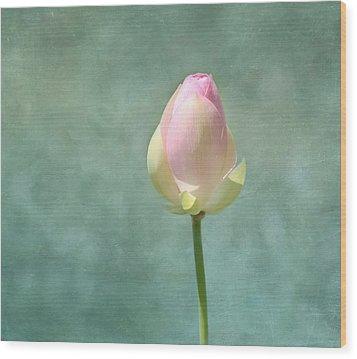 Lotus Flower Bud Wood Print by Kim Hojnacki