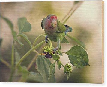 Lovebird On  Sunflower Branch  Wood Print by Saija  Lehtonen