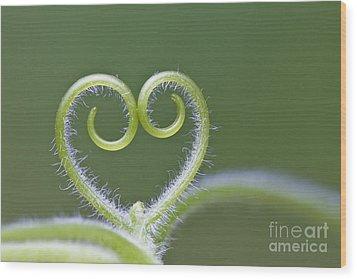 Loving Nature Wood Print by Maria Ismanah Schulze-Vorberg