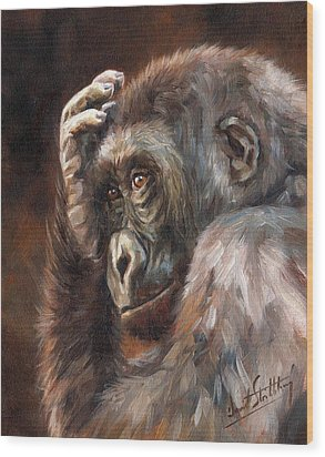 Lowland Gorilla Wood Print by David Stribbling