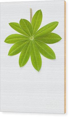 Lupin Leaf Wood Print by Anne Gilbert