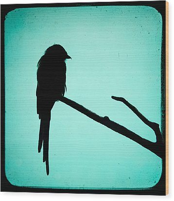 Magpie Shrike Silhouette Wood Print by Gary Heller