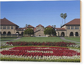 Main Quad Stanford California Wood Print by Jason O Watson