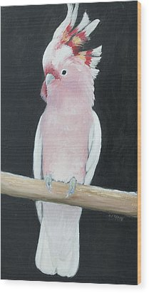Major Mitchell Cockatoo Wood Print by Jan Matson