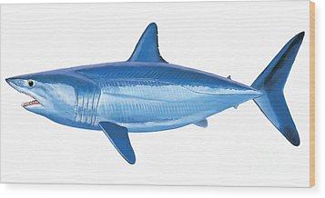 Mako Shark Wood Print by Carey Chen