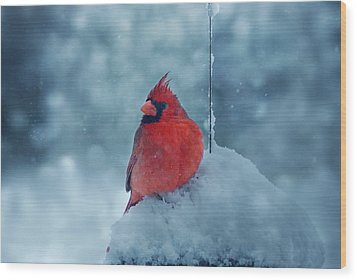 Male Cardinal In The Snow Wood Print by Sandy Keeton
