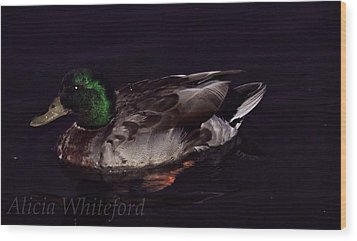 Mallard 2 Wood Print by Alicia Whiteford