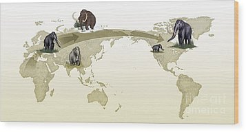 Mammoth Evolutionary Migration Wood Print by Spl