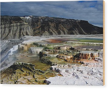 Mammoth Hot Springs Wood Print by Robert Woodward