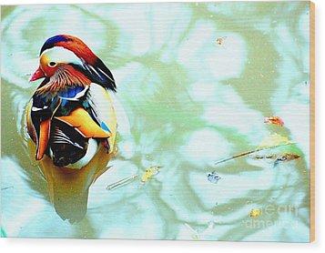 Mandarin Duck Resting II Wood Print by C Lythgo