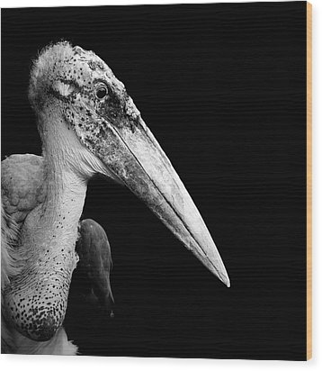 Portrait Of Marabou Stork In Black And White Wood Print by Lukas Holas