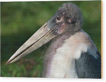 Marabou Stork Wood Print by Nigel Downer