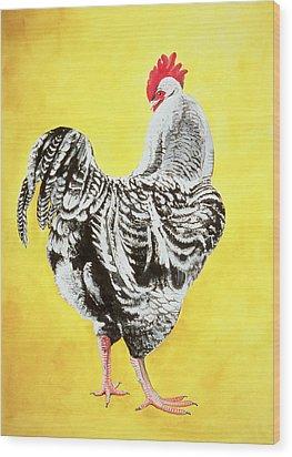 Maran Cockrel Wood Print by Jeanne Maze