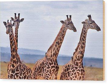 Masai Giraffe Wood Print by Adam Romanowicz