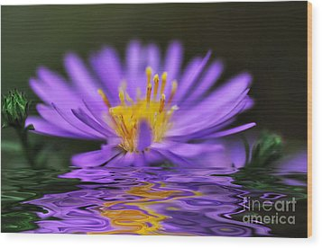 Mauve Softness And Reflections Wood Print by Kaye Menner