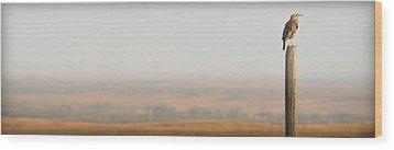 Meadowlark Mornings.. Wood Print by Al  Swasey