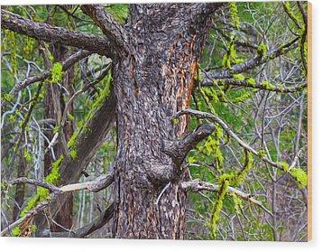 Medusa Tree Wood Print by Omaste Witkowski