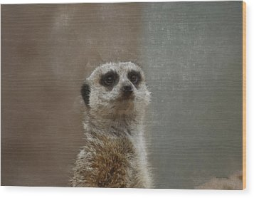 Meerkat 5 Wood Print by Ernie Echols