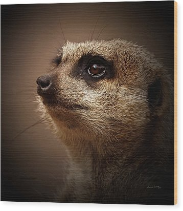 Meerkat 6 Wood Print by Ernie Echols