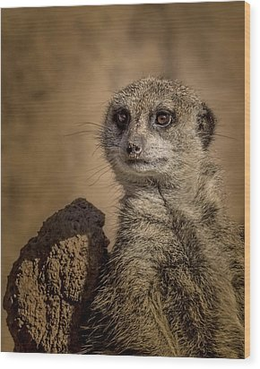 Meerkat Wood Print by Ernie Echols