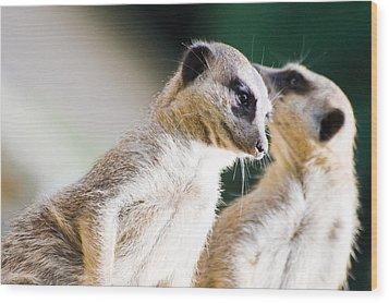 Meerkats Wood Print by Daniel Kocian