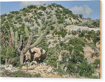 Mexican Desert Landscape Wood Print by Linda Phelps