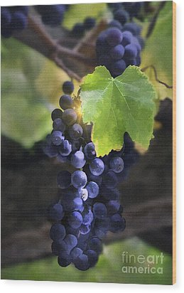 Mission Grapes II Wood Print by Sharon Foster