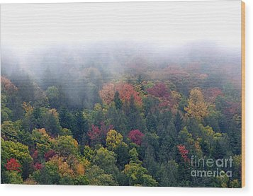 Mist And Fall Color Wood Print by Thomas R Fletcher
