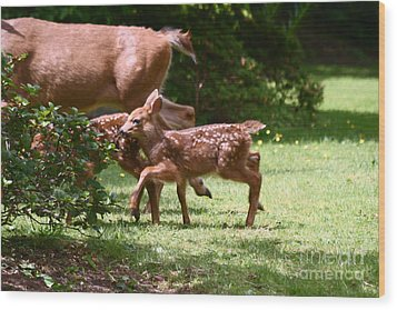 Mommy Is Here Time To Run Wood Print by Kym Backland