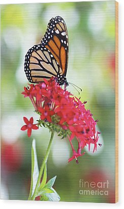 Monarch V Wood Print by Pamela Gail Torres