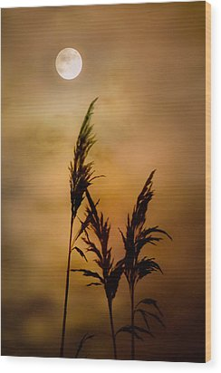 Moonlit Stalks Wood Print by Gary Heller