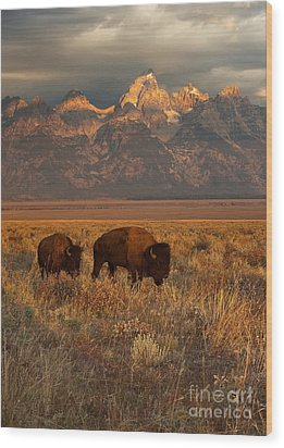 Morning Travels In Grand Teton Wood Print by Sandra Bronstein