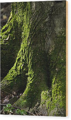 Moss Covered Tree Trunk Wood Print by Christina Rollo