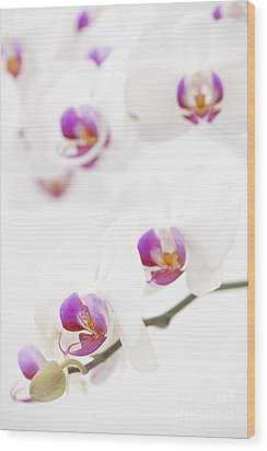 Moth Orchid Wood Print by Anne Gilbert