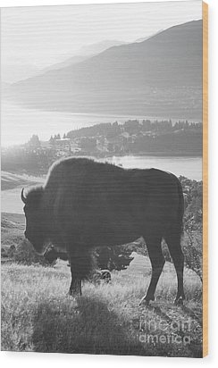 Mountain Wildlife Wood Print by Pixel  Chimp
