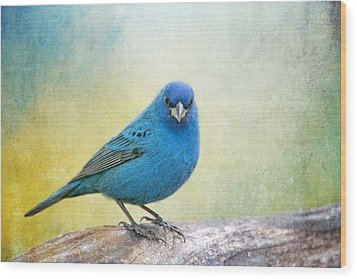 Mr. Blue Wood Print by Bonnie Barry