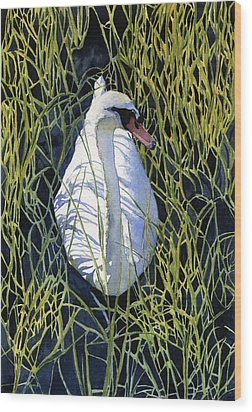 Mute Swan Wood Print by Heidi Gallo