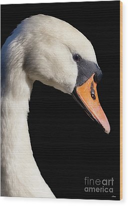 Mute Swan Wood Print by Wobblymol Davis